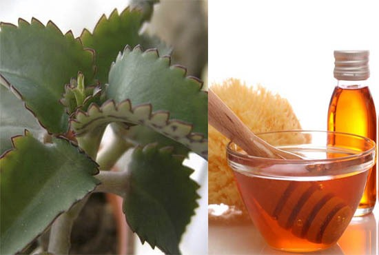 мед и каланхоэ