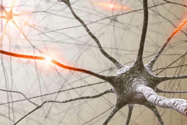 соединения в мозге